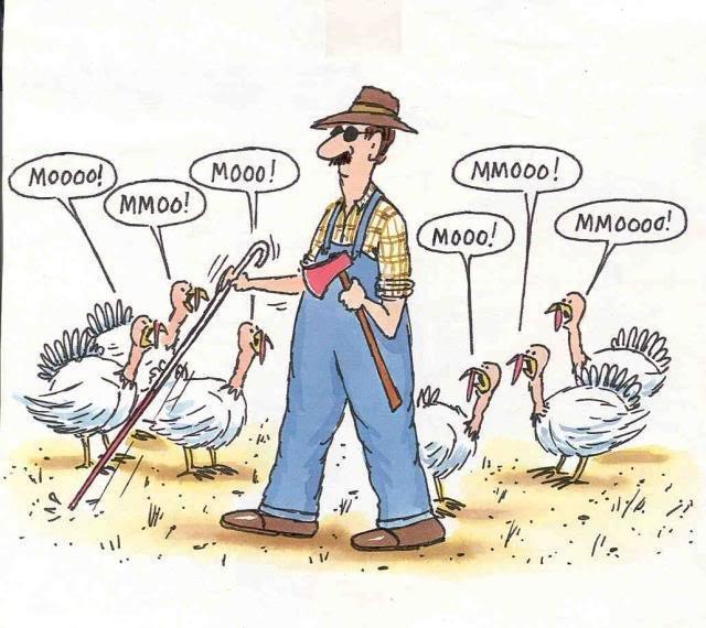 thanksgiving-turkeys-posing-as-cows